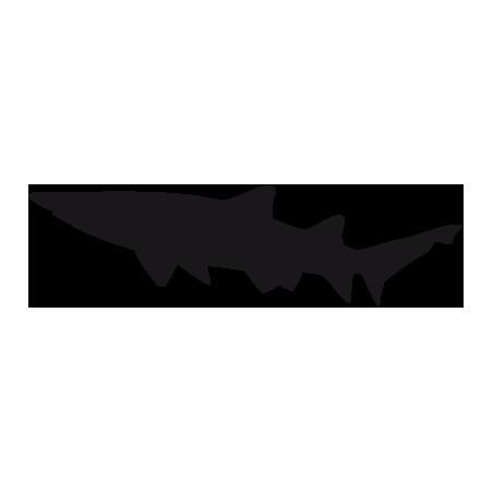 Requin 1